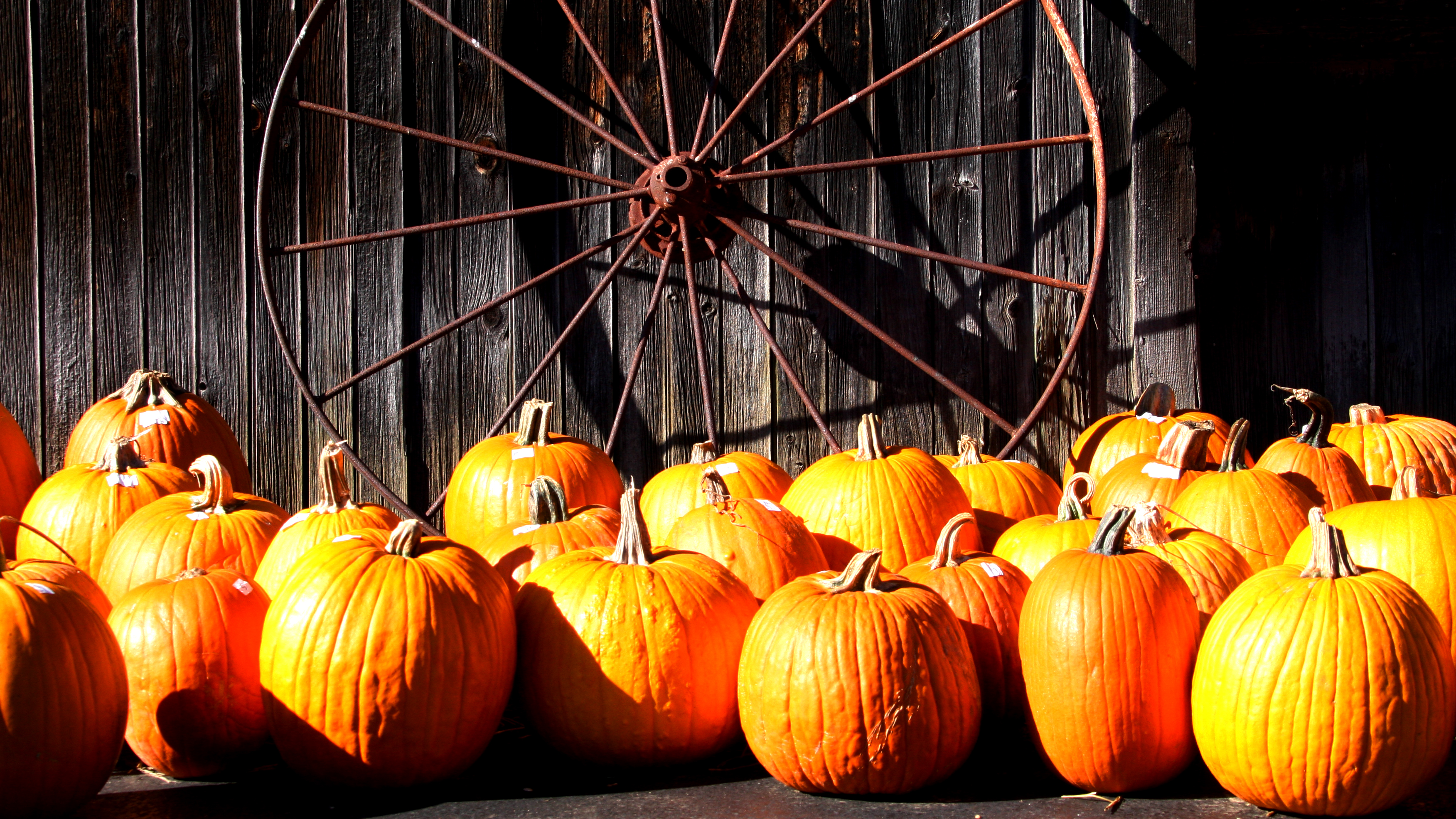 Pumpkin-and-Spoke-Wheel